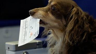 把寵物帶進ANA的客艙—ワンワンフライト