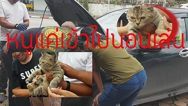 หาที่อุ่นๆ จนท.กู้ภัย ช่วยนำลูกแมวออกจากห้องเครื่องรถเก๋ง (ชมคลิป)