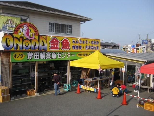 センター 斧田 観賞 魚