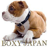 ボクシージャパンボクシングジム