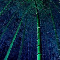 bamboo.hair