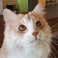 猫カフェ キャッチー