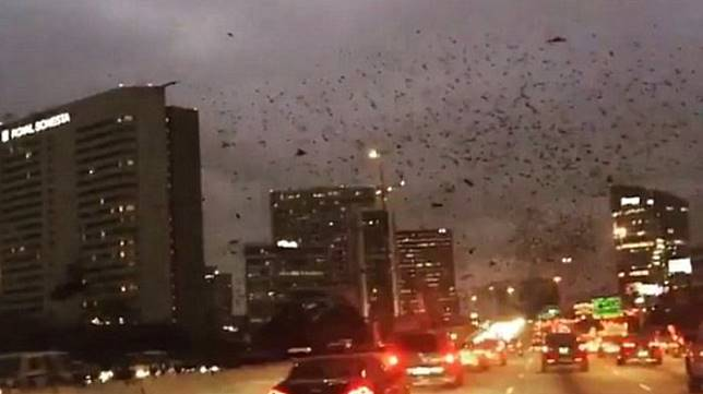 Serem! Tiba-tiba Ribuan Burung Hitam Bersuara Menakutkan Menyerbu Texas, Pertanda Bencana?