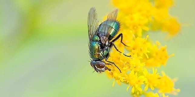 Lifestyle : Ini Cara Mudah Menyingkirkan Lalat Dengan Plastik Air Sepele,